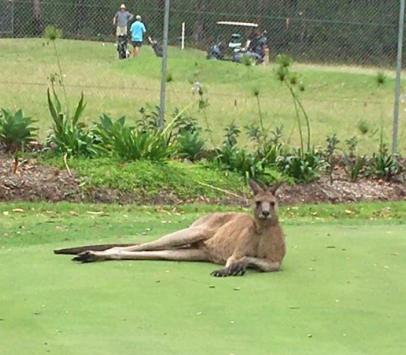 Fair dinkum this a spectator at the golf event